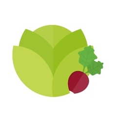Green cabbage and red radish vegetable vegetarian vector