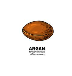 argan drawing organic essential oil sketc vector image vector image