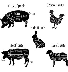 Butcher chart diagramm vector image