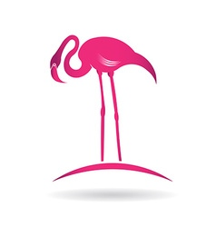 Flamingo bird over pond vector