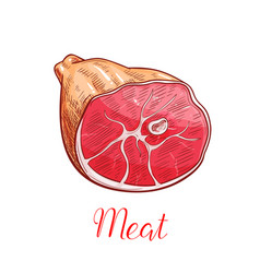 Ham meat isolated sketch with smoked pork leg vector