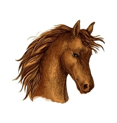 Brown arabian horse sketch for equine sport design vector