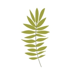 Isolated leaf decoration design vector