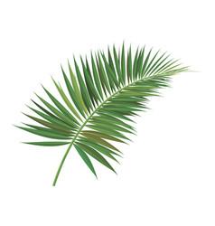 Palm tree branch vector