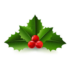 xmas holly berry vector image vector image