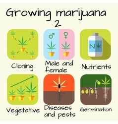 Marijuana growing set vector
