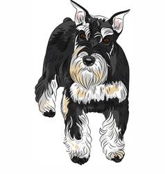 Dog breed miniature schnauzer black and silver vector