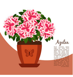 Azalea indoor plant in pot banner vector