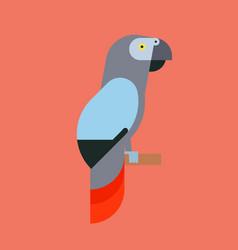 Parrot bird breed species animal nature tropical vector