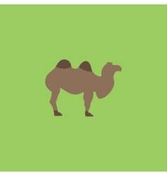 Camel flat icon vector