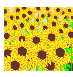 Background of beautiful sunflowers vector image vector image