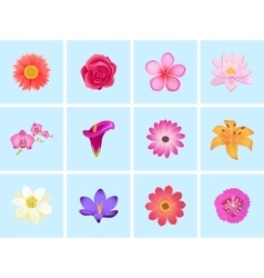 Flower Color Set Design Flat Isolated vector image vector image