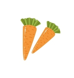 Two Fresh Carrots Bright Color Isolated vector image