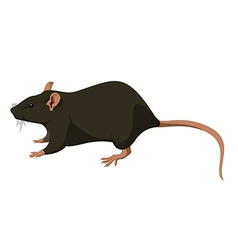 Rat nature vector