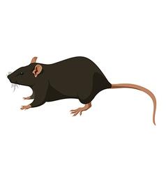 Rat nature vector