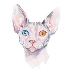 Hand drawn portrait elegant sphynx cat vector