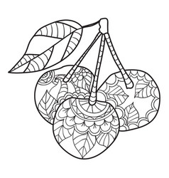 coloring pages for adults cherry sketch fruits vector image vector image