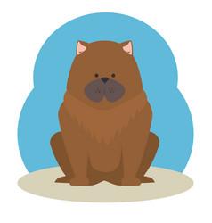 cute puppy dog vector image
