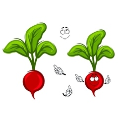 Happy smiling cartoon radish vegetable vector