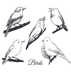 Ink hand drawn birds collection vector