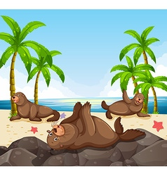 Seals having fun on the beach vector