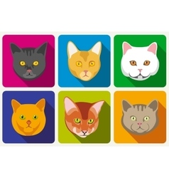 Cat portraits collection vector