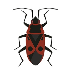 Red soldier bug vector image vector image