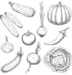 Farm vegetables sketches for agriculture design vector