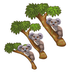 funny koala bears rest on trees animals vector image