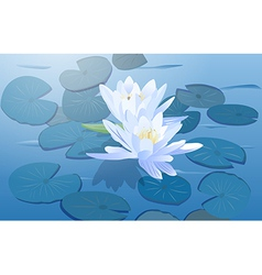 Lily flowers vector