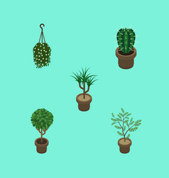 Isometric plant set of peyote fern houseplant vector