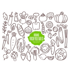Set of hand drawn vegetables doodles vector