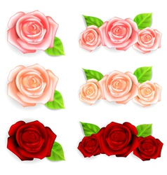 Set of roses with green leaves vector image