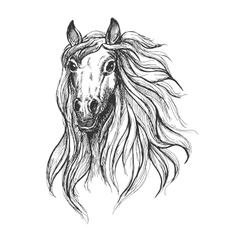 Sketch of wild young mare head vector