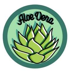 Color vintage aloe vera emblem vector