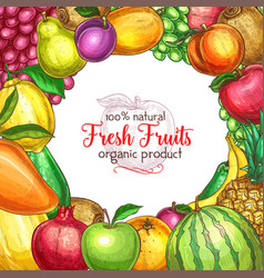 Fruit frame sketch poster for food drink design vector