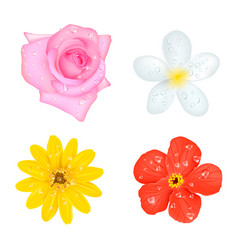 four flowers with drops set vector image vector image