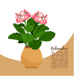 kalanchoe plant in pot banner vector image