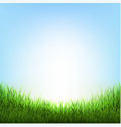 nature background with grass vector image vector image