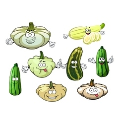 Zucchini marrow and squash vegetables vector