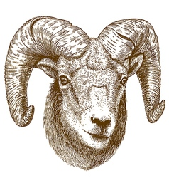 Engraving ram head vector