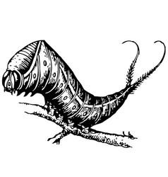 harpyia vinula caterpillar vector image vector image