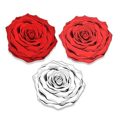 Set realistic sketch of roses Elegant flowers to vector image vector image