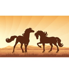 Horses on field on sunset background vector