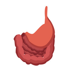 Human stomach intestine biology medical vector
