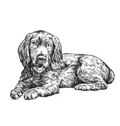 Dog spaniel hand drawn llustration vector