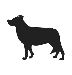 Border collie black silhouette vector image