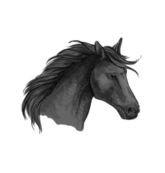 Black riding horse sketch of arabian stallion vector