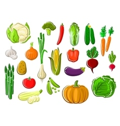 Healthy fresh ripe isolated farm vegetables vector