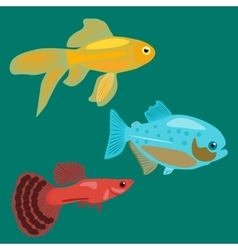 Aquarium fish goldfish piranha guppy vector